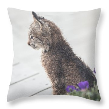 Throw Pillow featuring the photograph Profile In Kitten by Tim Newton