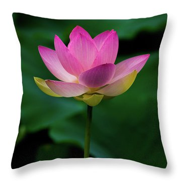 Throw Pillow featuring the photograph Profile Of A Lotus Lily by Dennis Dame