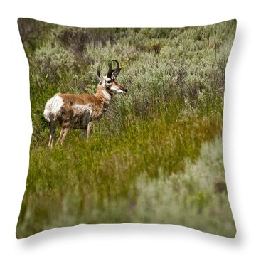 Prong Horn Throw Pillow by Chad Davis