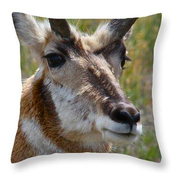 Pronghorn Buck Face Study Throw Pillow by Karon Melillo DeVega
