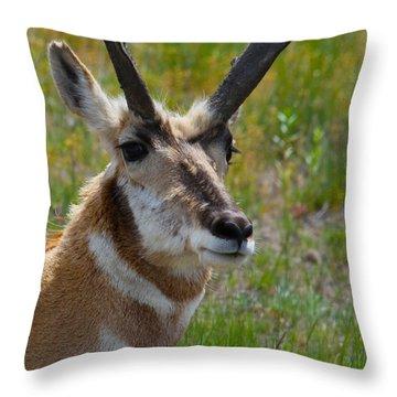 Pronghorn Buck Throw Pillow by Karon Melillo DeVega