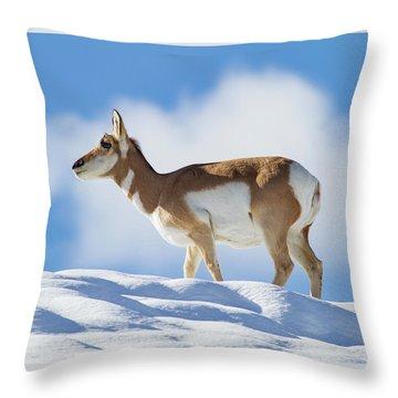 Pronghorn Doe On Snowy Ridge Throw Pillow