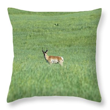 Pronghorn In A Sea Of Green Throw Pillow