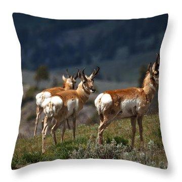Pronghorns Throw Pillow