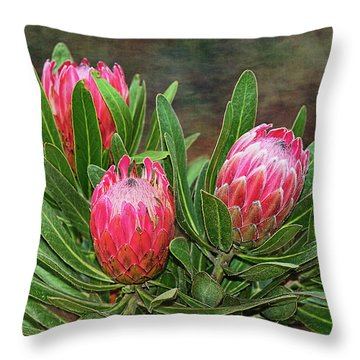 Throw Pillow featuring the photograph Proteas In Bloom By Kaye Menner by Kaye Menner