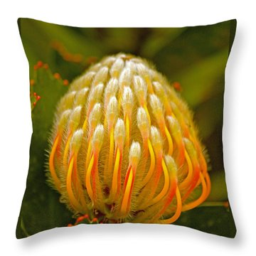 Proteas Ready To Blossom  Throw Pillow