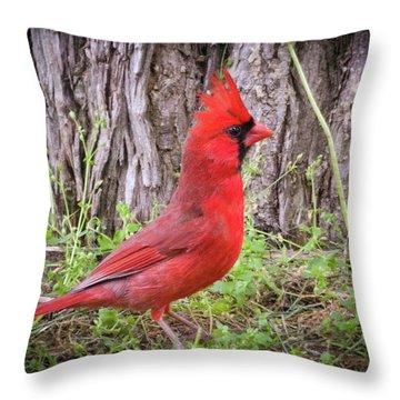 Proud Cardinal Throw Pillow
