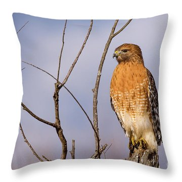 Proud Profile Throw Pillow by Charles Hite