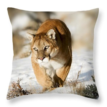 Prowling Mountain Lion Throw Pillow