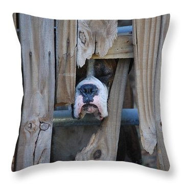 Psst Help Me Outta Here Throw Pillow by DigiArt Diaries by Vicky B Fuller