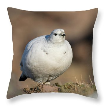 Throw Pillow featuring the photograph Ptarmigan Going For A Stroll by Karen Van Der Zijden
