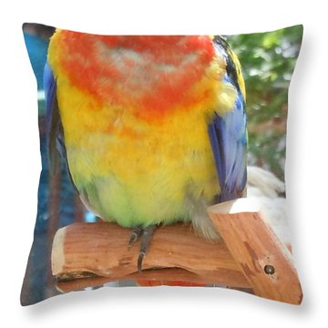 Multi-color Pudgy Budgie Throw Pillow