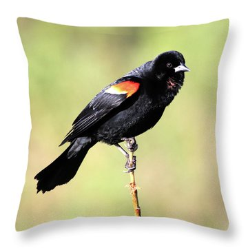 Throw Pillow featuring the photograph Puffed Throat by Shane Bechler