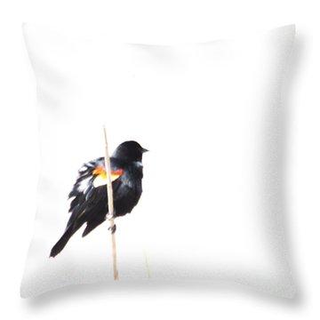 Puffed Up Red-winged Blackbird Throw Pillow