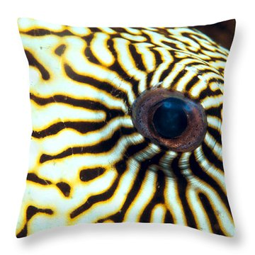 Pufferfish Throw Pillow by Dave Fleetham - Printscapes
