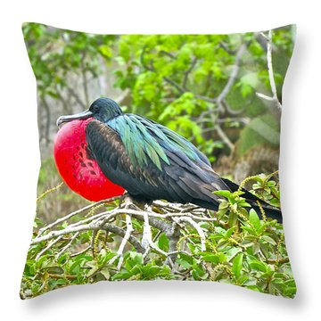 Puffing Up When Courting Throw Pillow