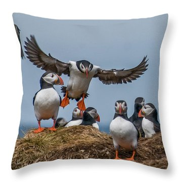 Puffins Throw Pillow by Brian Tarr