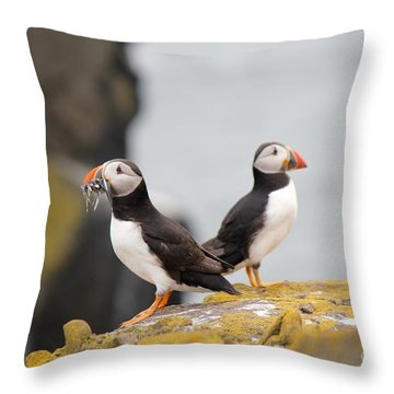 Puffin's Throw Pillow