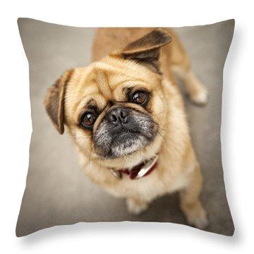 Pug Dog 2 Throw Pillow by Mike Santis