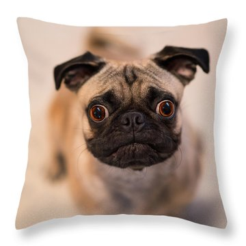 Throw Pillow featuring the photograph Pug Dog by Laura Fasulo