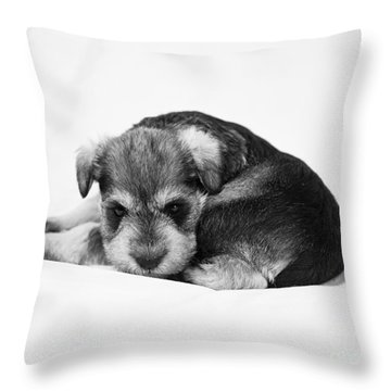Puppy 1 Throw Pillow by Serene Maisey