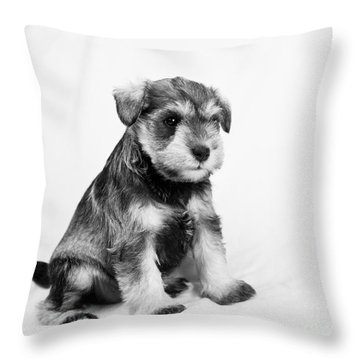 Throw Pillow featuring the photograph Puppy 2 by Serene Maisey