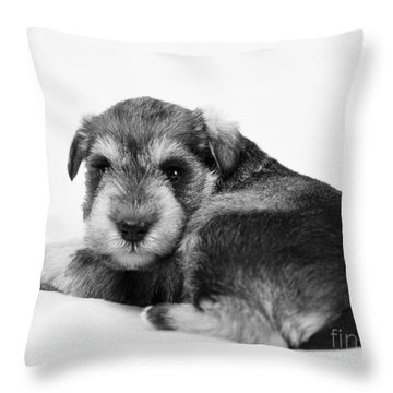 Throw Pillow featuring the photograph Puppy 3 by Serene Maisey