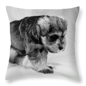 Throw Pillow featuring the photograph Puppy 4 by Serene Maisey
