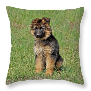 Puppy Halo Throw Pillow by Sandy Keeton