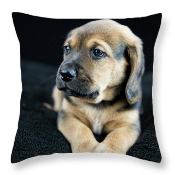 Puppy Portrait Throw Pillow