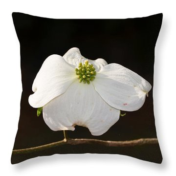 Pure White Throw Pillow by Linda Brown