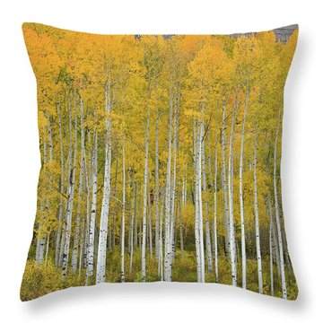 Throw Pillow featuring the photograph Purgatory Aspen Grove by Ray Mathis