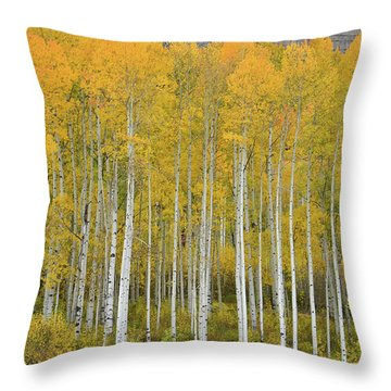Purgatory Aspen Grove Throw Pillow