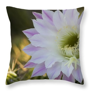 Throw Pillow featuring the photograph Purple And White Glory  by Bryan Keil