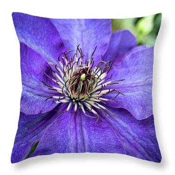 Throw Pillow featuring the photograph Purple Clematis by Chrystal Mimbs