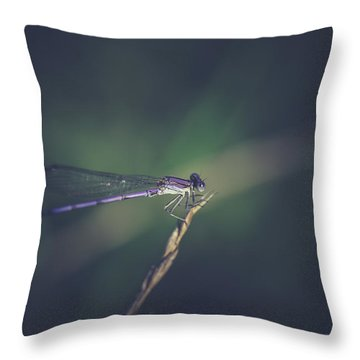 Throw Pillow featuring the photograph Purple Damsel by Shane Holsclaw