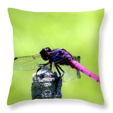 Throw Pillow featuring the photograph Purple Dragon by Terri Mills