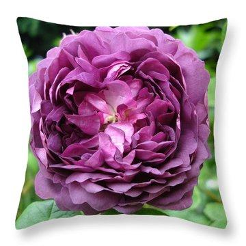 Purple English Rose Throw Pillow