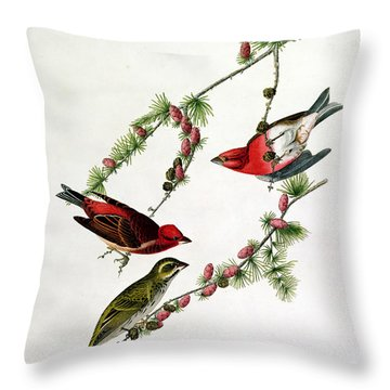 Purple Finch Throw Pillow by John James Audubon