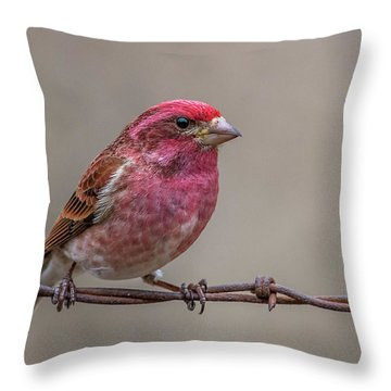 Throw Pillow featuring the photograph Purple Finch On Barbwire by Paul Freidlund