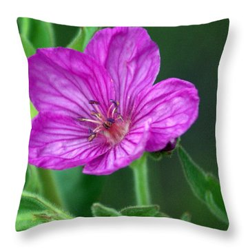 Purple Flower 2 Throw Pillow by Marty Koch