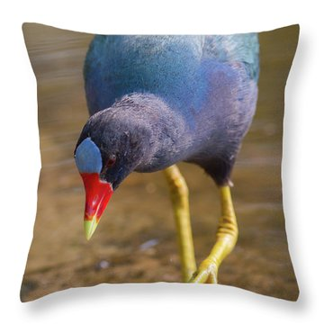 Purple Gallinule Bigfoot Throw Pillow