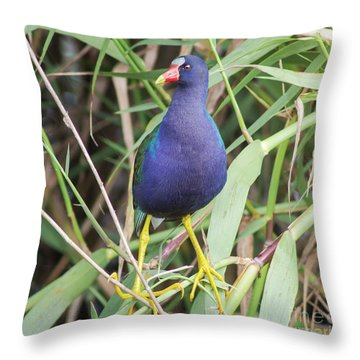 Throw Pillow featuring the photograph Purple Gallinule by Robert Frederick