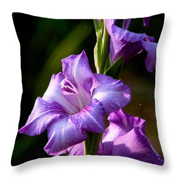 Purple Glads Throw Pillow by Christopher Holmes
