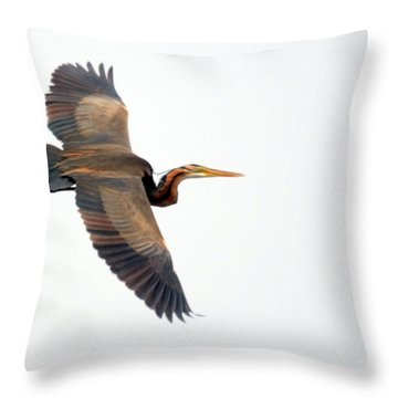 Purple Heron In Flight Throw Pillow