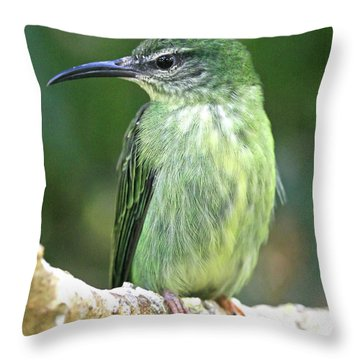 Purple Honeycreeper Female Throw Pillow