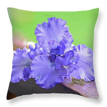Throw Pillow featuring the photograph Purple by Lila Fisher-Wenzel