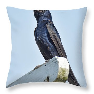 Purple Martin  Throw Pillow by Alan Lenk