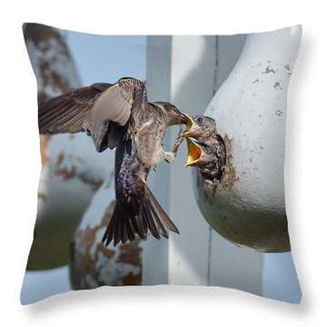 Purple Martin Feeding Chicks Throw Pillow by Alan Lenk