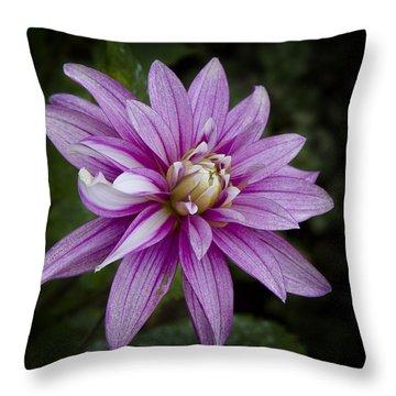 Purple Pink Dahlia Throw Pillow